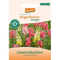 Bingenheimer Saatgut - Löwenmäulchen