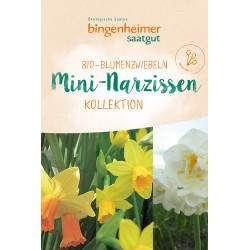 Bingenheimer Saatgut - Mini Narzissen Blumenzwiebeln - 9st