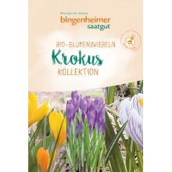 Bingenheimer Saatgut - Krokus Blumenzwiebeln - 9st