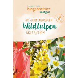 Bingenheimer de Semillas Wildtulpen Bulbos de flores - 9st