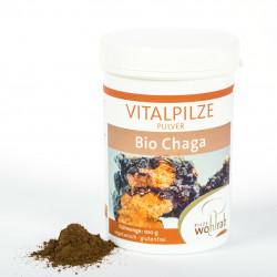 Wohlrab - Chaga, ORGANICO in polvere 100g