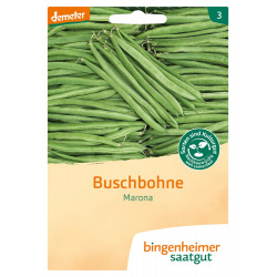 Bingenheimer Saatgut - French beans Marona - 30g