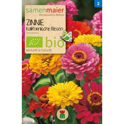 Samen Maier - Bio Zinnie Kalifornische Riesen - 1Tüte