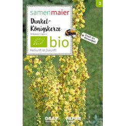 Samen Maier - Bio Dunkel-Königskerze - 1Tüte
