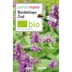 Samen Maier - Bio Dichtblütiger Ziest - 1Tüte