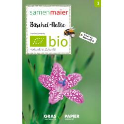 Samen Maier - Bio Büschelnelke - 1Tüte