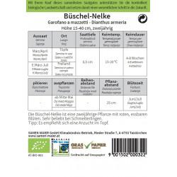 Seeds Maier - organic clove...