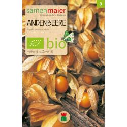Samen Maier - Bio Physalis Andenbeere - 1Tüte