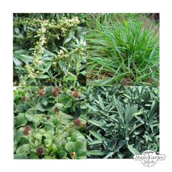 Magic Garden Seeds -...