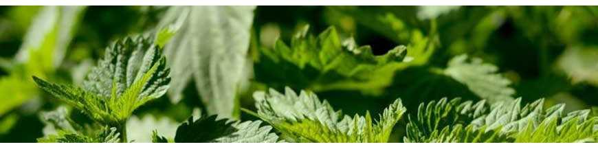 Extraits liquides de plantes